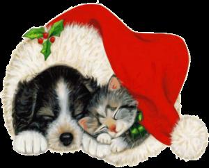 Kattunge og valp sover i en nisselue.